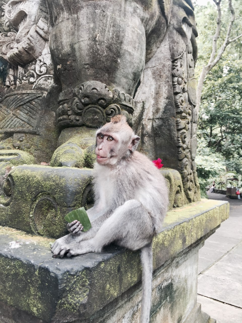 UBUD MONKEY FOREST  - This jungle forest is home to around 700 monkeys.Watch playful monkeys in their natural habitat, swinging through trees, lazing along pathways or feeding on bananas. Walk through ancient temples deep within the forest.It can be one of the most terrifying things if attacked by a Monkey, so be prepared!