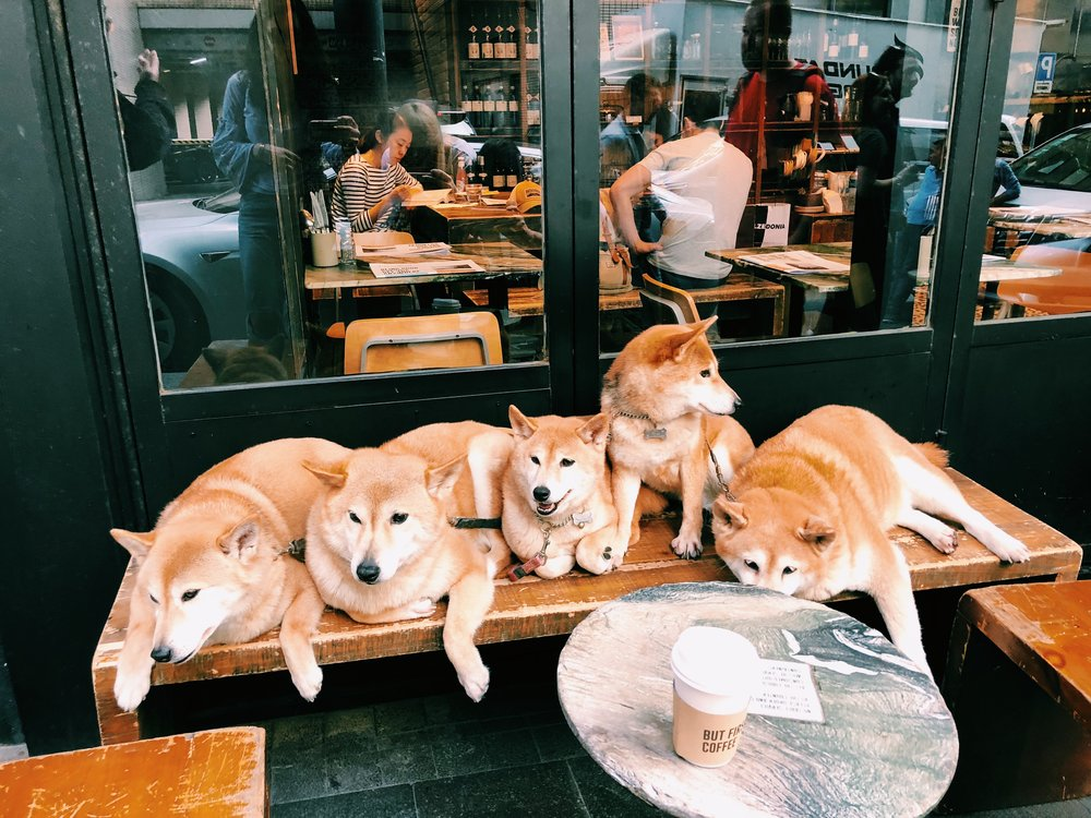 Follow this family of shibas on Instagram: @shibaland