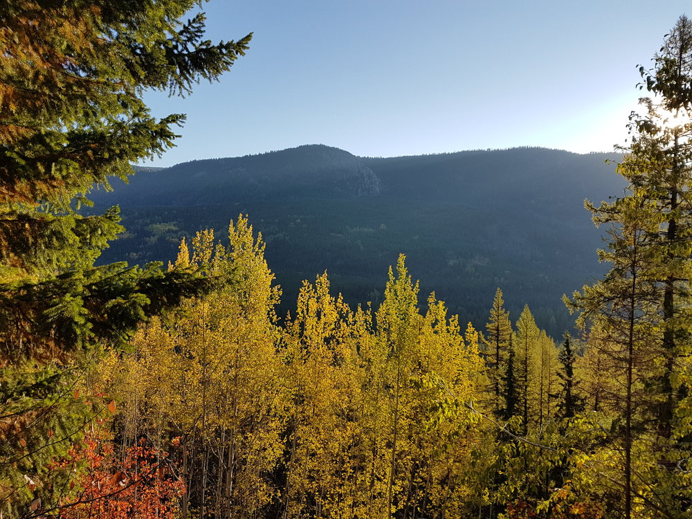 Fall colours on the upper KVR