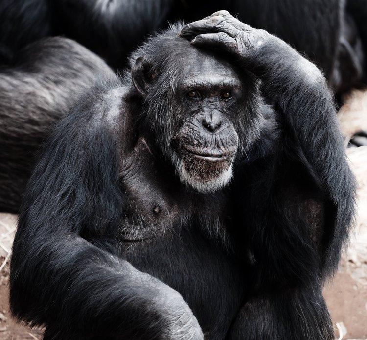 Ante una civilización más desarrollada nosotros pareceríamos tan primitivos como un chimpance