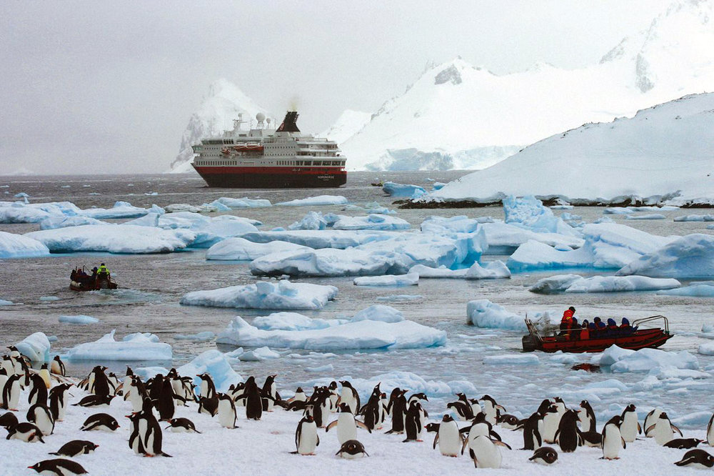 crucero-colonia-de-pinguinos.jpg