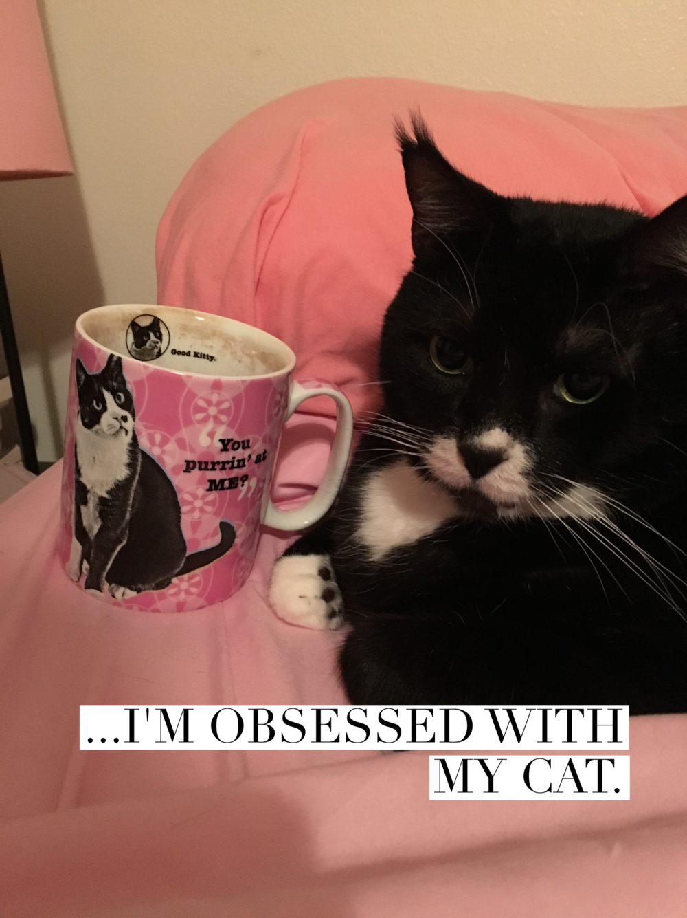 Sondheim Schwartzman Glass has lots of love to give, and enjoys tea in the mornings with a cat much like himself.