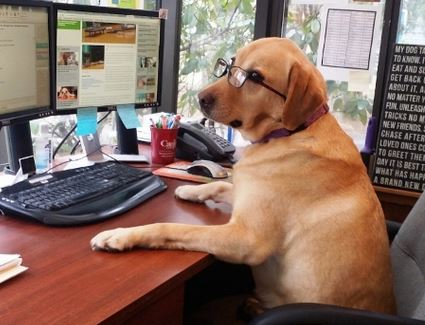 dogwork.jpg