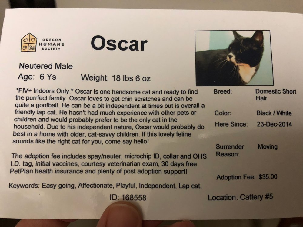 His name was Oscar when we met. Clearly, he's too fancy for that!