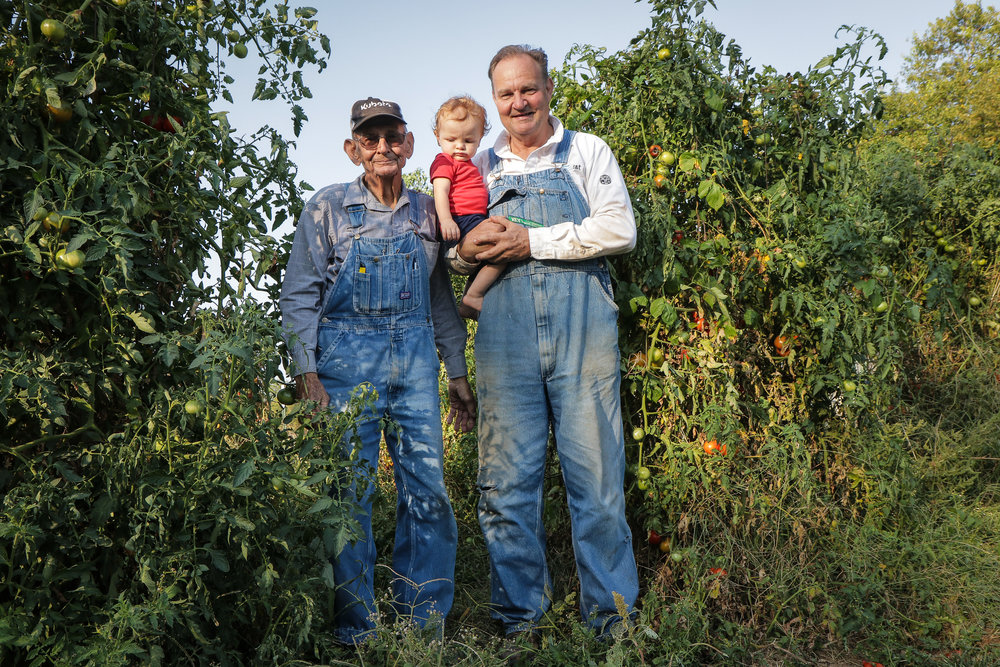 "Carl (left), between the tomato plants with great-grandson Mason, 1, and son Mike (right) on Mike's 350-acre farm in Barnett, Mo., Sept. 25, 2017.  Some days Carl and his son Mike drive Mason to daycare in what they refer to as ""The Grandpa Express."""