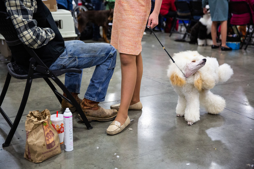 dogshow_edit_7.jpg