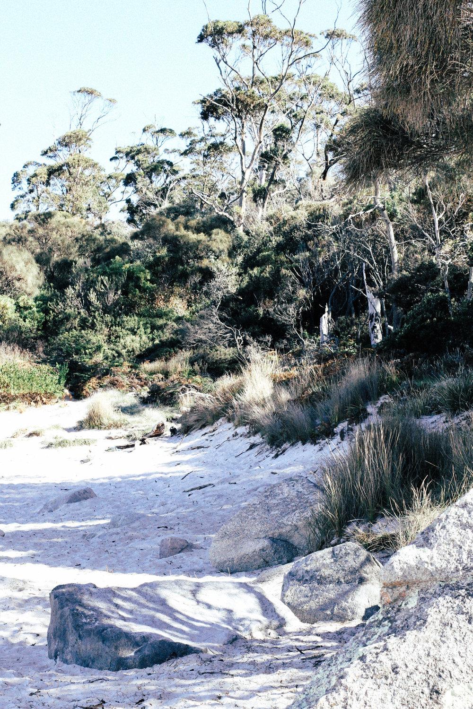 Tasmania IV.jpg