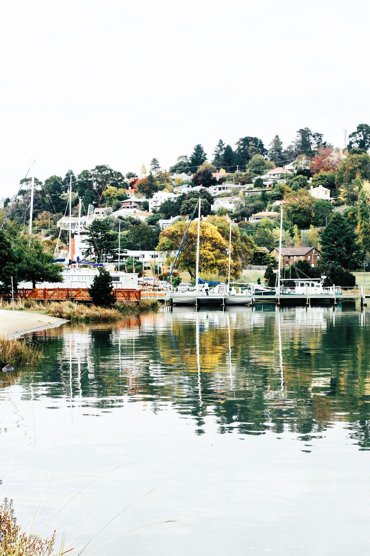 Tasmania V.jpg