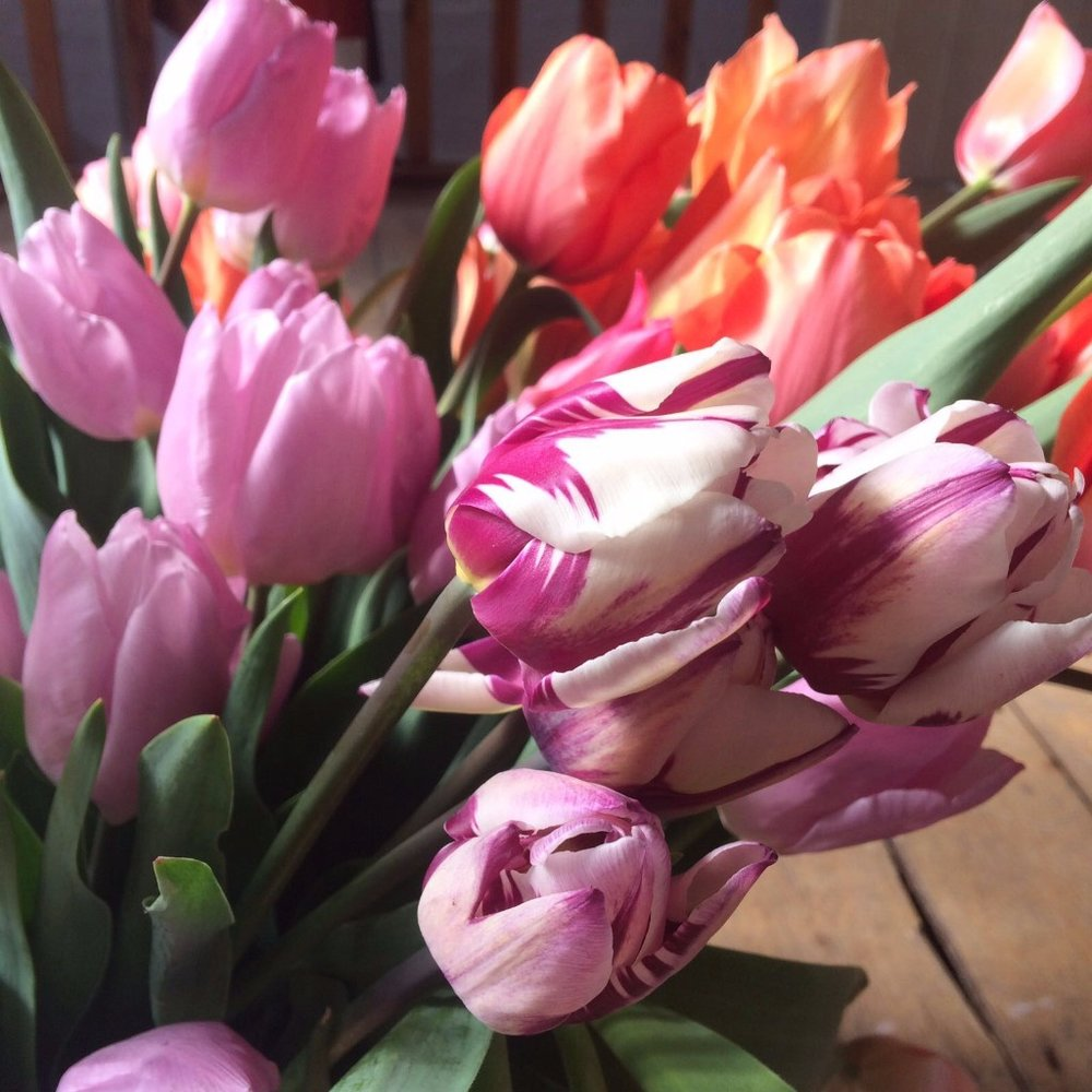 These Are Our Tulips Today >> The Flower Appreciation Society