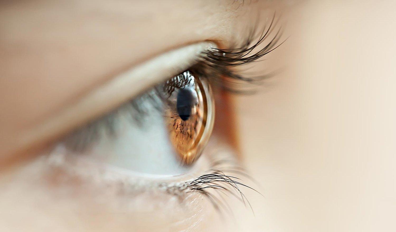 Anatomía del ojo — Univer