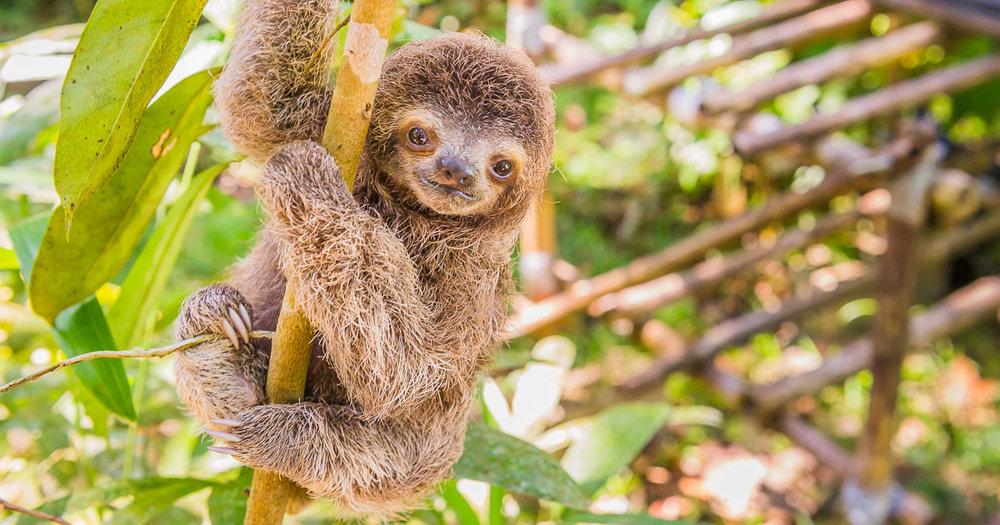 costa-rica-baby-animals-fb.jpg