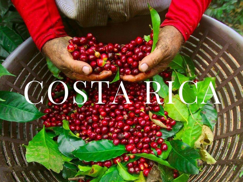 Costa Rica_IG Scholar_Immersion