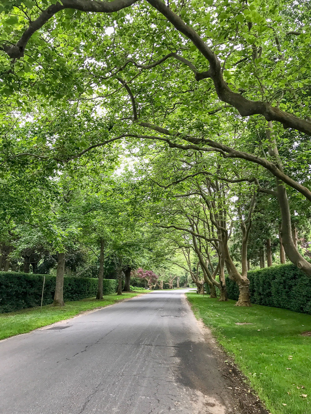 Tree lined street of my dreams!