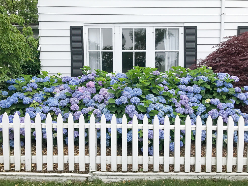 Give me all the hydrangeas.