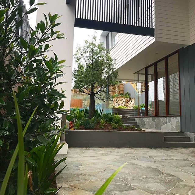 PROJECT UPDATE || Our Carroll Street project for @corellaconstruct is settling in nicely and gets better every week.  A repost of the outdoor area featuring an Australian bush inspired plant palette, bluestone paving and a stunning Queensland Bottle Tree. Expertly installed by @lushlandscapesolutions 📸 @corellaconstruct  #verdedesigngroup #thinkbeyonddesign #carrollstreetproject #qldbottletree #instantlandscape #residentiallandscape