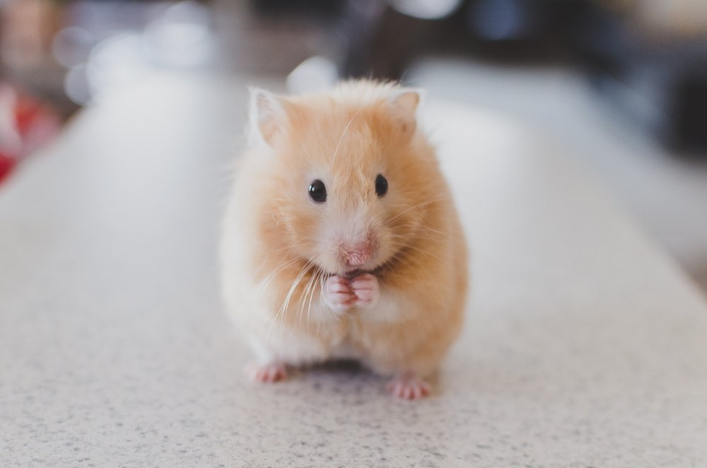 Just like this bewildered hamster, many small business owners are confused after listening to lots of scattergun marketing advice.