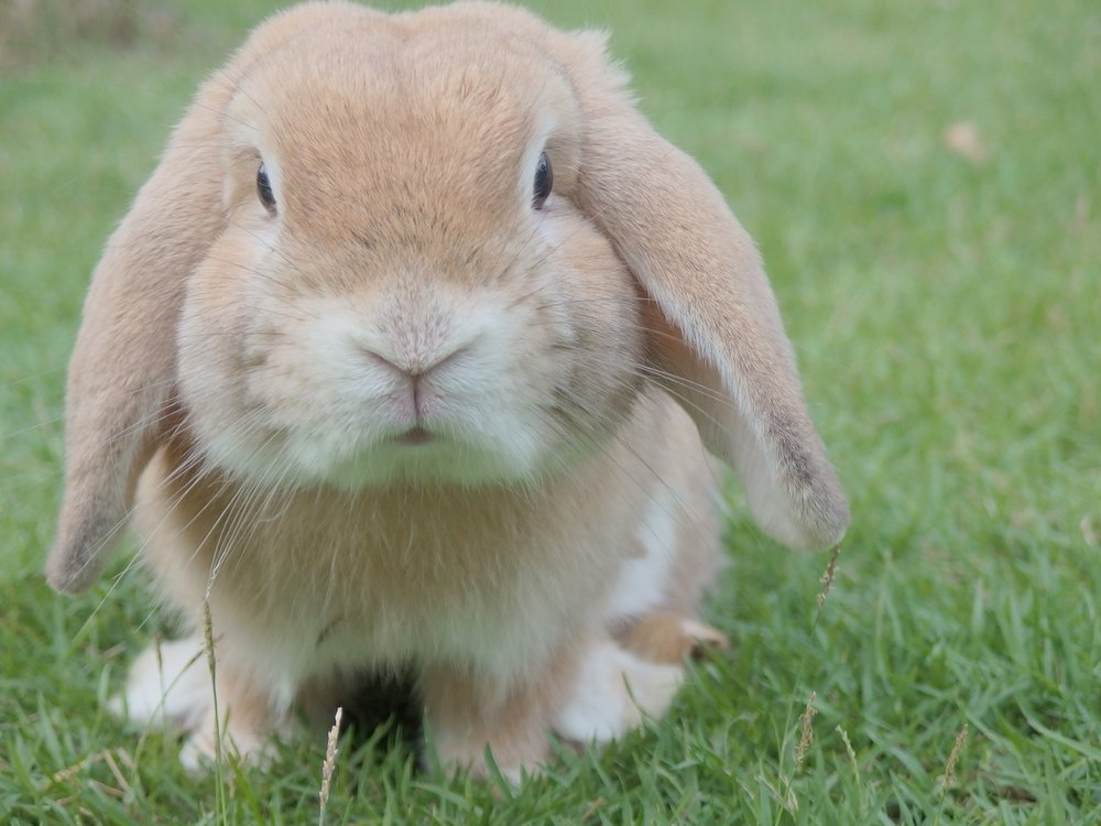 Unlike this grumpy looking rabbit, a small business community should makes us feel upbeat and supported.