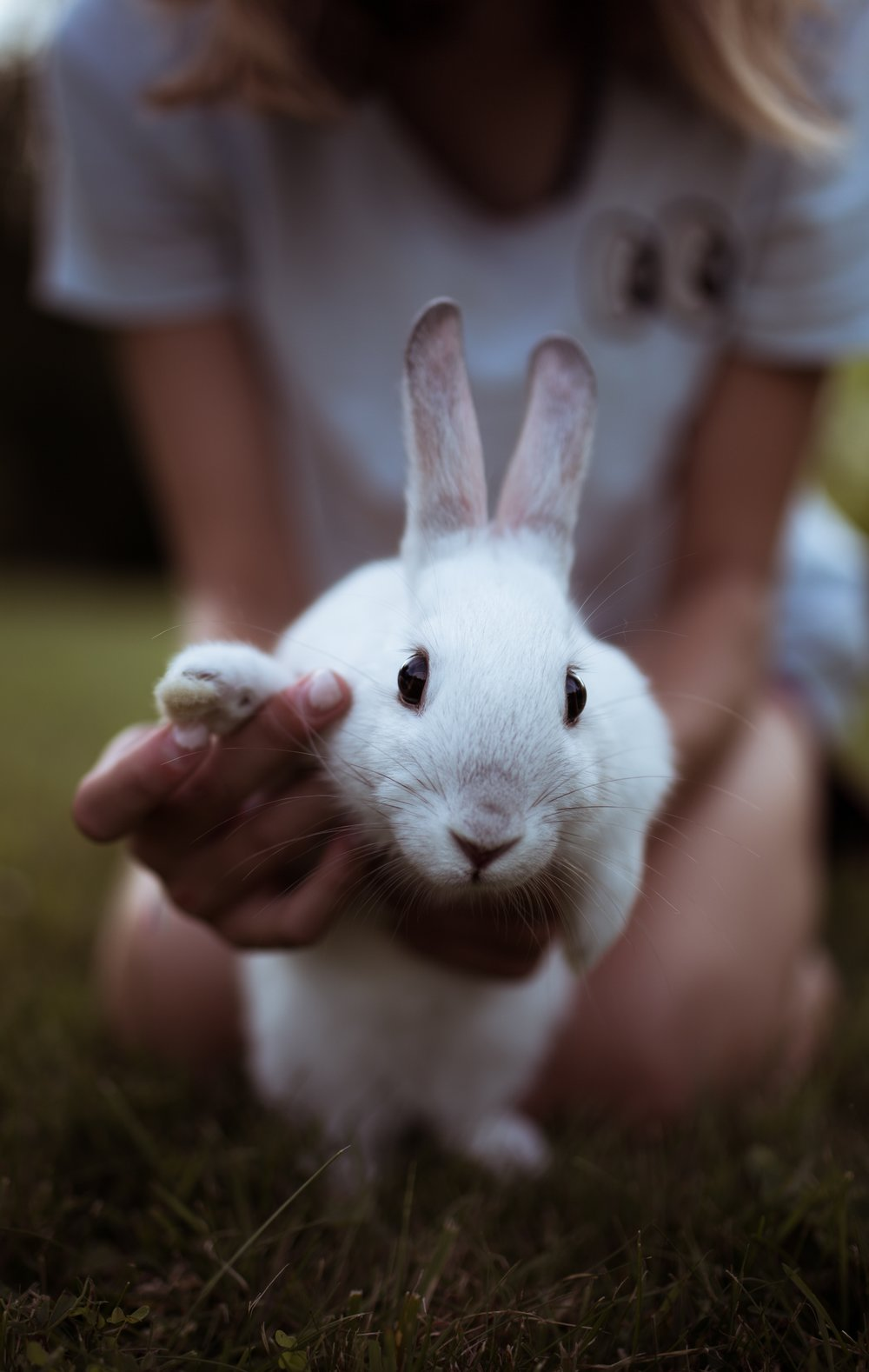A bit like this rabbit, we're happy to welcome you to this page :)