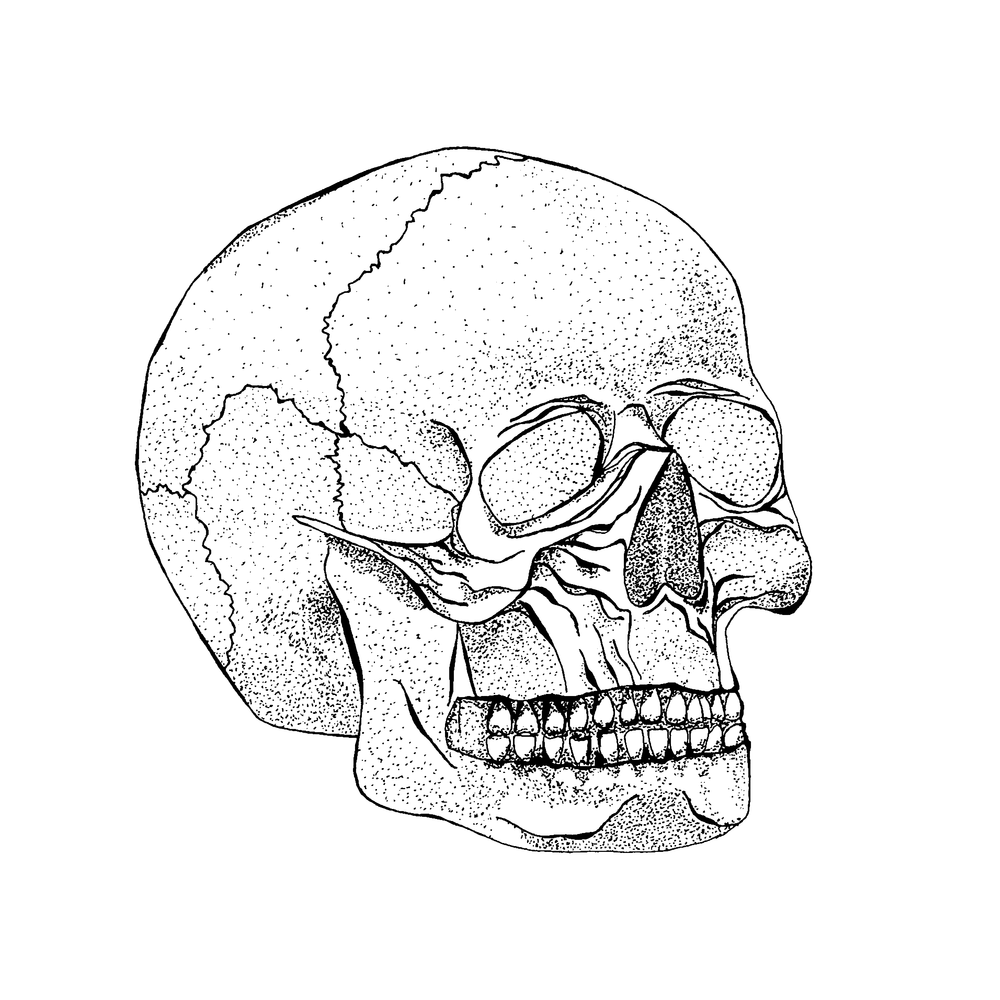 Stippled Skull-Personal Project