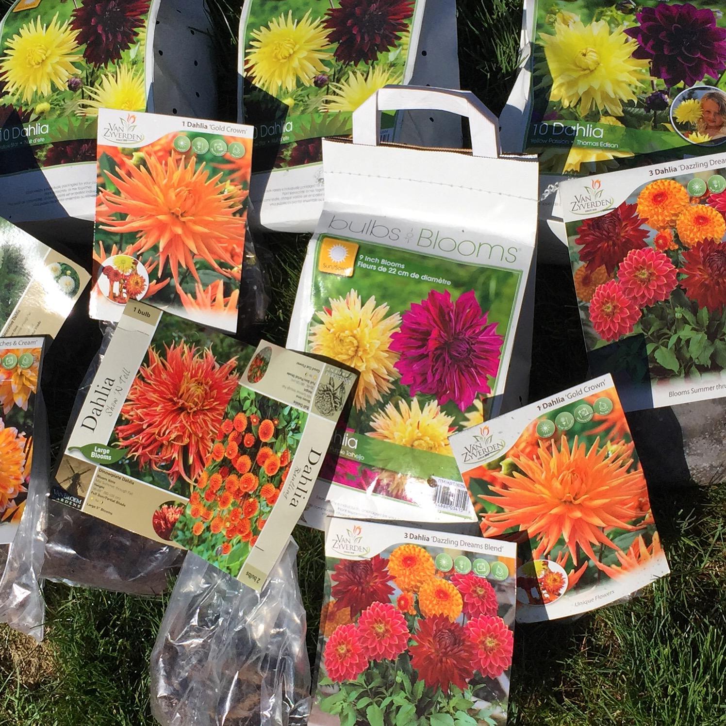 hundreds of Dahlias to plant this summer