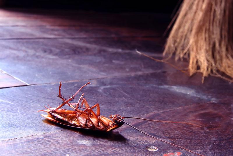 élimination de blattes cafards moustiques