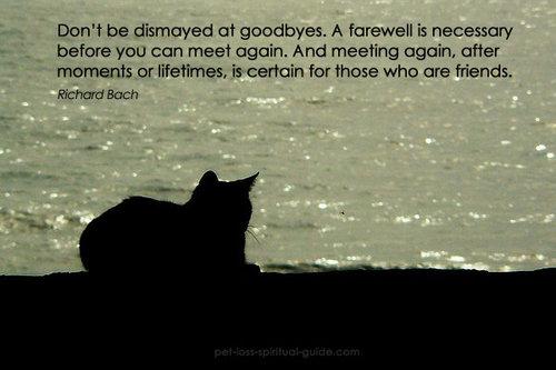 Pet Loss Quotes Inspirational Pet Loss Quotes — Acp