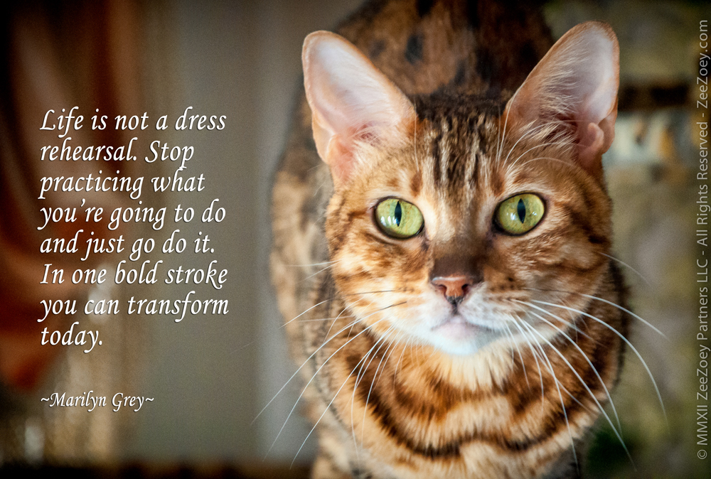 Loss Of A Cat Quotes Best Inspirational Pet Loss Quotes ACP