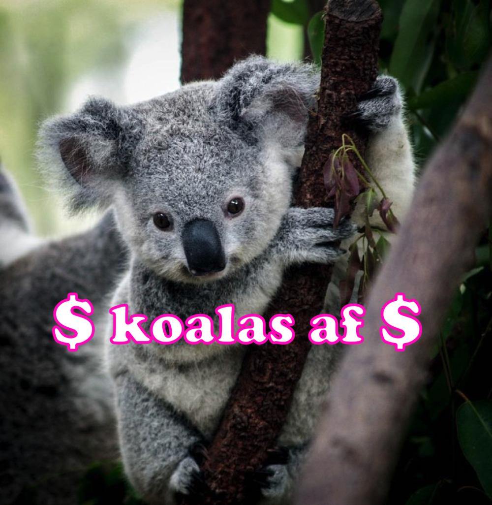 koalasaf.png