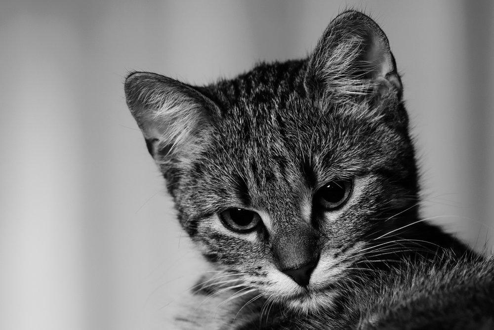 Cat/Pet Visit