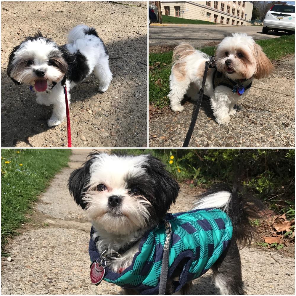 Daisy, Teddy & Gus