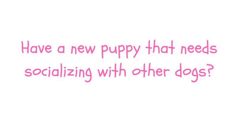 Puppy Socializing.png