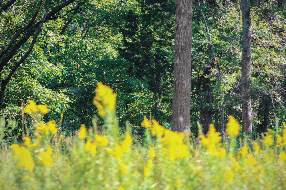 A colorful glimpse of the Elk and Bison Prarie.