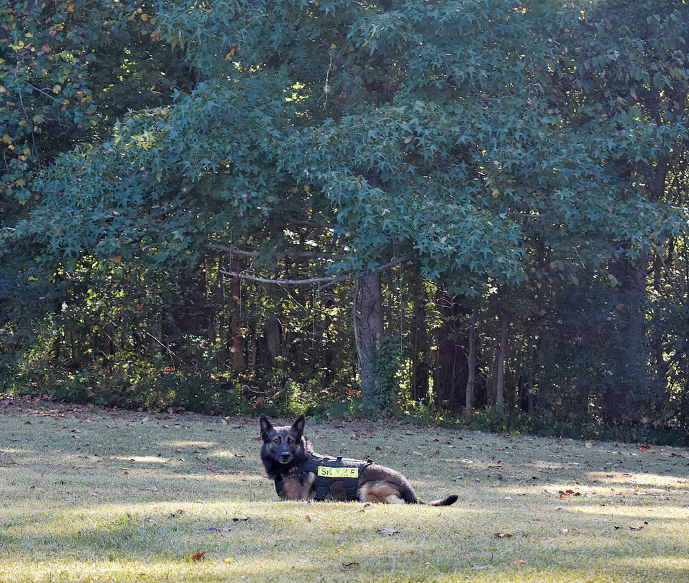 k9 in grass.jpg