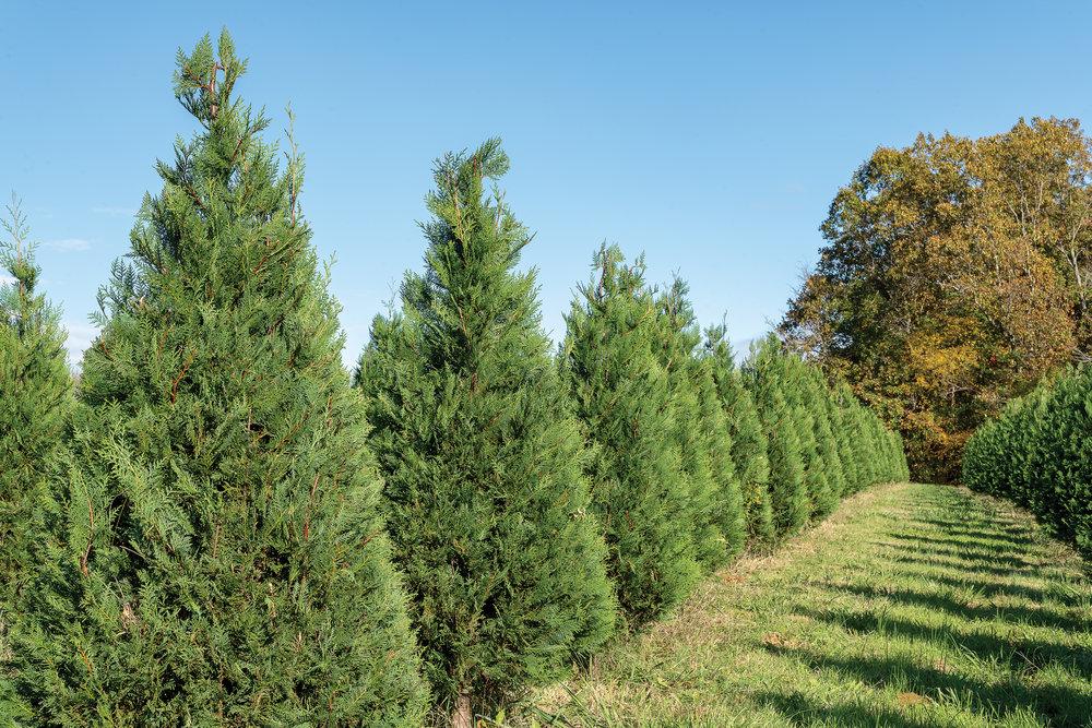 Christmas Tree Farm083.jpg