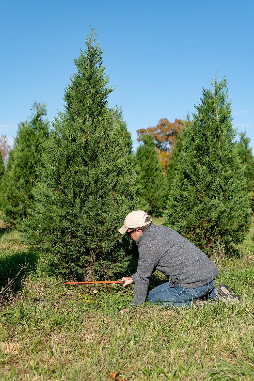 Christmas Tree Farm101.jpg
