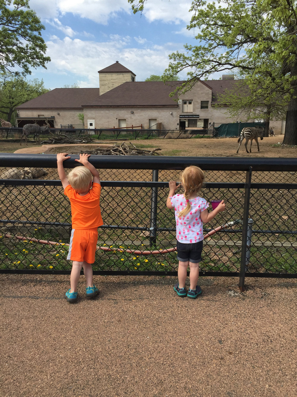 Impromptu zoo trip on Friday afternoon.