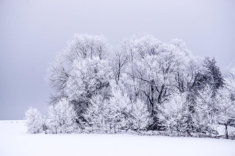 © Blind Spot Creatives - Winter - Minnesota - Photography - Frost