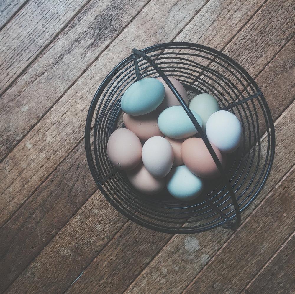 eggs in wire basket.jpg