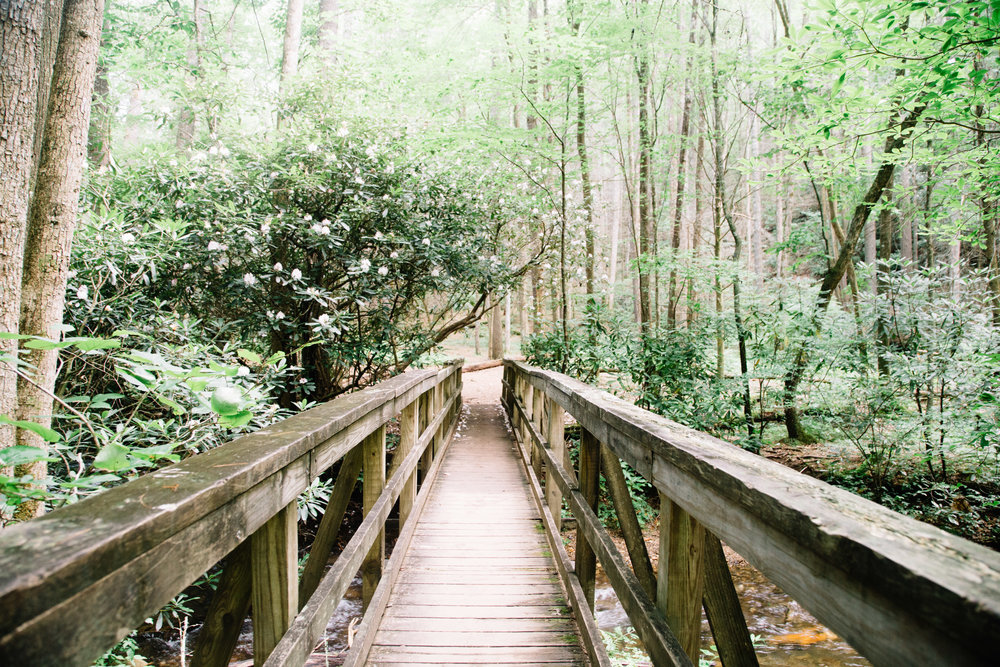 Ready for adventure? Head over to moredetours.com to see a guide to the perfect Georgia summer day.
