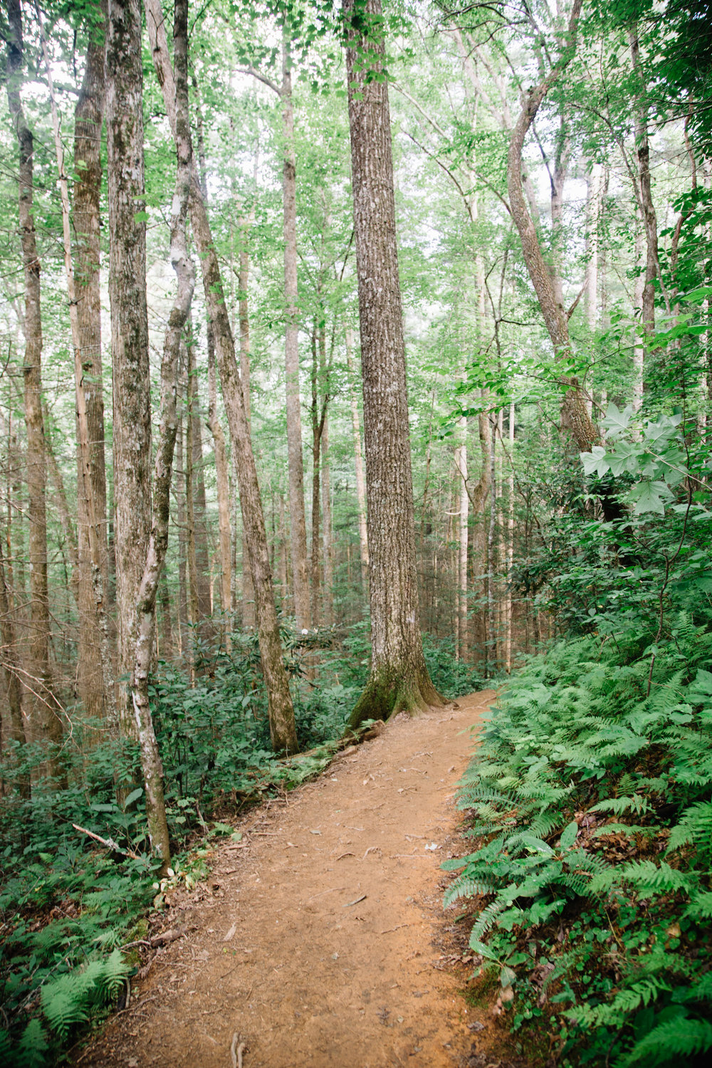 Where will the trail lead you? Learn about this awesome trip perfect for a Georgia summer day.