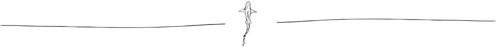 NCA Shark Illustration.png