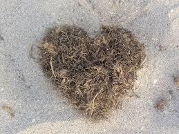 kelpheart.png