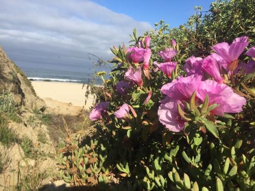 flowers_beach_500.jpg