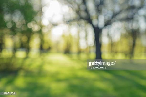 Photo by GooDween123/iStock / Getty Images