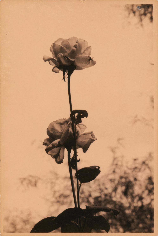Flowers, Tucson Botanical Gardens