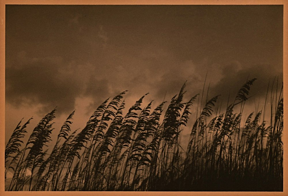 Love Letter to Florida (reeds)
