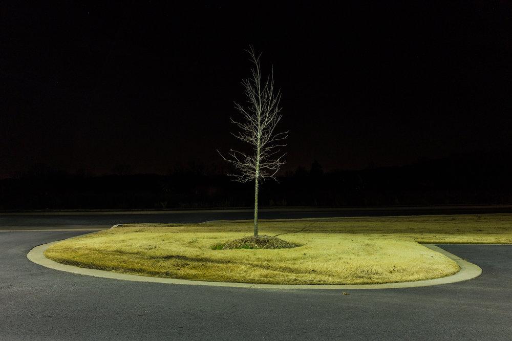 47 HP Tree.jpg