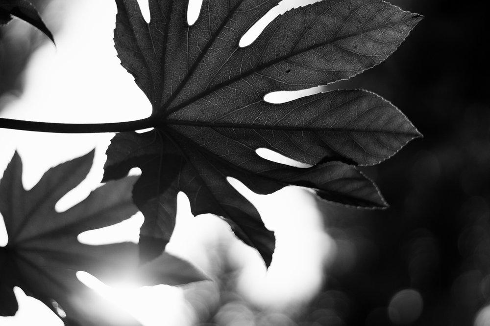 romani_leaves.jpg