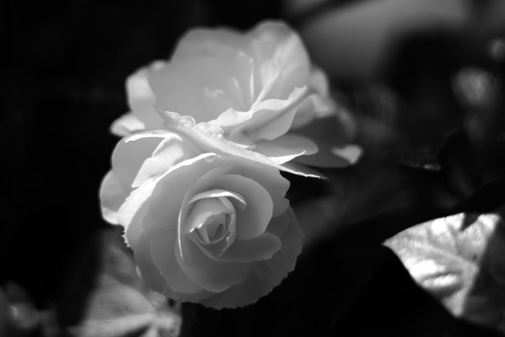 romani_flower.jpg