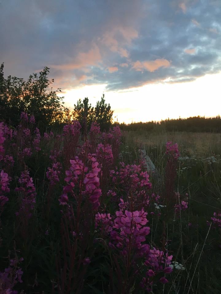 night flowers.jpg